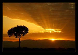 Sunrise_Tree-600x421
