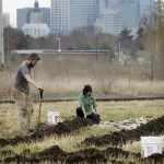 Jim Bovino and Jillia Pessenda of California Street Farm, transforming the urban environment. Photo source: Star Tribune