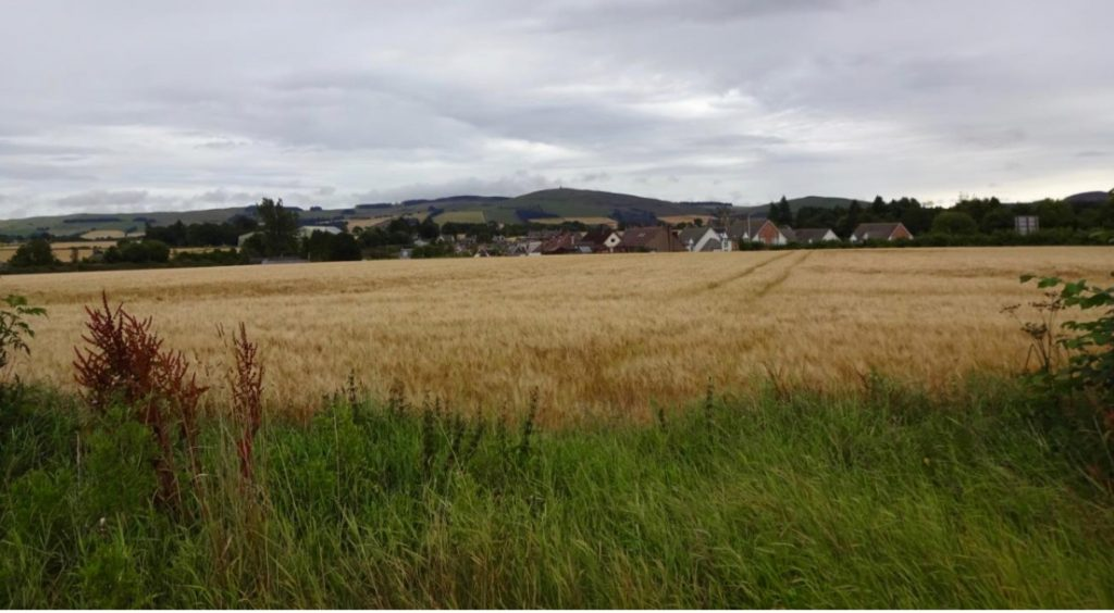 The village of Meigle is surrounded by productive agricultural land such as this barley field. (Photo by author, 2016)