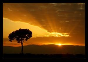 Sunrise_Tree-600x421