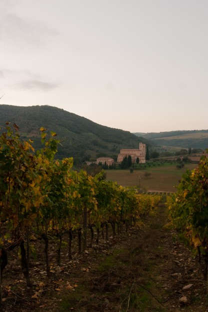 This is the vineyard in Tuscany I walked through.  It was an unforgettable experience.